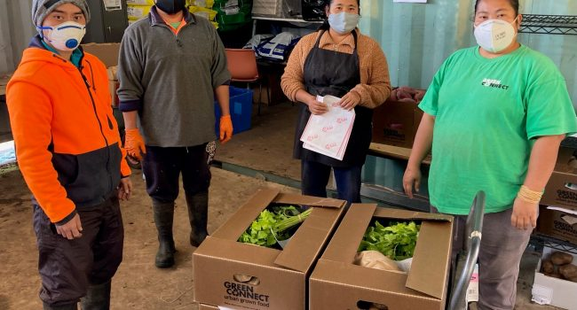 Harvest and packing team, Green Connect